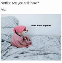 Cute, Funny, and Netflix: Netflix: Are you still there?  Me:  l don't know anymore  IG  : Quincyfo I'm joining the @basicbitchfoundation today. (Cute pup is @quincyfox)