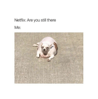 YES THIS IS ME HAHAHAHAHAHAHAHA: Netflix: Are you still there  Me: YES THIS IS ME HAHAHAHAHAHAHAHA