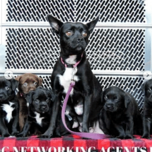 Beautiful, Girl, and Her: NETWORKING ACK  TSI My beautiful rescue girl, Maddie, and all of her babies! Rescue story in comments!