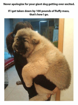 Dank, Memes, and Soon...: Never apologize for your giant dog getting over excited.  If I get taken down by 100 pounds of fluffy mass,  that's how I go. See you soon my best pupper by jintaravalerie MORE MEMES