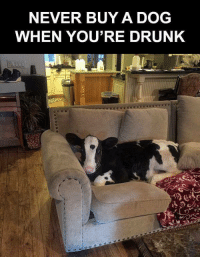 Drunk: NEVER BUY A DOG  WHEN YOU'RE DRUNK