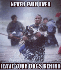 Dogs, Memes, and Never: NEVER EVER  YOUR DOGS BEHIND HURRICANEFLORENCE