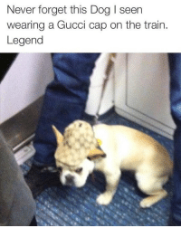 Gucci, Train, and Dank Memes: Never forget this Dog I seen  wearing a Gucci cap on the train.  Legend @fakeyeezyboosts
