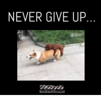 <p>Funny Wednesday madness  Hilarious midweek pictures  PMSLweb </p>: NEVER GIVE UP <p>Funny Wednesday madness  Hilarious midweek pictures  PMSLweb </p>