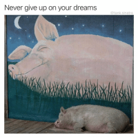 Funny, Dreams, and Never: Never give up on your dreams  @tank.sinatra These are the only kind of motivational posts I like