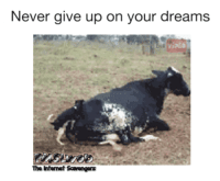 <p>LOL picture collection  Your Friday funnies are here  PMSLweb </p>: Never give up on your dreams  The Intemet Scavengers <p>LOL picture collection  Your Friday funnies are here  PMSLweb </p>