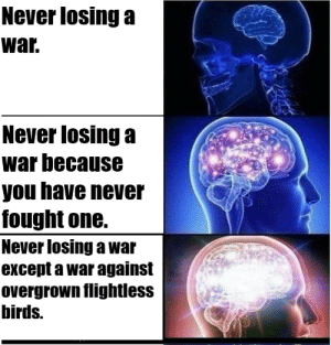 Birds, History, and Never: Never losing a  war.  Never losing a  war because  you have never  fought one.  Never losing a war  except a war against  overgrown flightless  birds. This is NOT for the contest