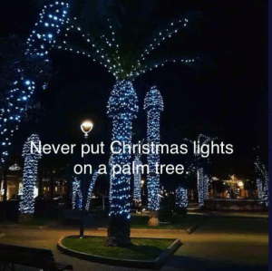 Santa Claus is Cumming to town: Never put Ciristmas lights  on a palm tree Santa Claus is Cumming to town