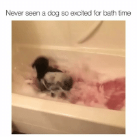 Cute, Funny, and Time: Never seen a dog so excited for bath time This is too cute (@charlottemaemyfrenchiebae)