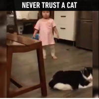 """Mwahaha tiny hooman, how many times have I told you to walk slowly?"": NEVER TRUST A CAT ""Mwahaha tiny hooman, how many times have I told you to walk slowly?"""