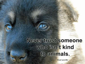 #trust www.woofandme.com: Never trust someone  who isn't kind  to animals.  Woof and Me #trust www.woofandme.com