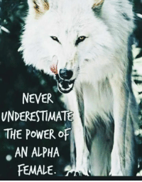 Power, Never, and Alpha: NEVER  VNDERESTIMATE  THE POWER oF  AN ALPHA  FEMALE