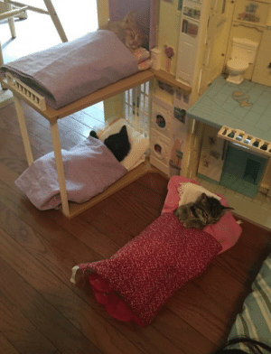 neverlandlester:  so my little cousin decided to put our cats into her dollhouse : neverlandlester:  so my little cousin decided to put our cats into her dollhouse