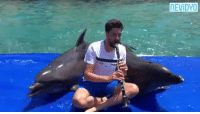Dancing, Life, and Target: NEVİDYO deadwithoutdata:  willcub:  ariesaav:  fuzzbutt07: *slams reblog*  Klezmer dolphins.   I don't know that I've reblogged anything faster in my entire tumblr life.    The one dancing and flailing at the end