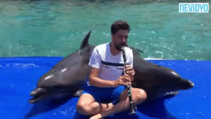Dancing, Life, and Tumblr: NEVİDYO deadwithoutdata:  willcub:  ariesaav:  fuzzbutt07: *slams reblog*  Klezmer dolphins.   I don't know that I've reblogged anything faster in my entire tumblr life.    The one dancing and flailing at the end