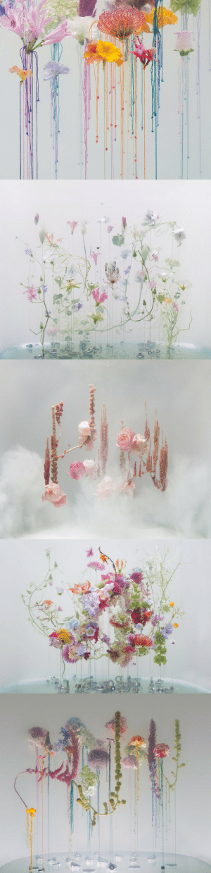 Tumblr, Blog, and Http: nevver:Flora and Fauna, Anne Ten Donkelaar