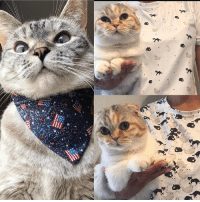 "Memes, 🤖, and Com: New all over printed Tshirt, bow ties and bandanas available at www.nalacat.com Use coupon code ""extra15"" for additional 15% off everything in store"