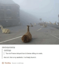 burg: new-burg-crossing:  viralthings:  Tour de France delayed due to llamas sitting on roads.  this is it. this is my aesthetic. I've finally found it.  Trending  source: viralthings