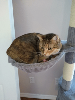 New cat tower came with baskets. I didn't think she would like them.: New cat tower came with baskets. I didn't think she would like them.