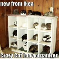 Crazy, Ikea, and Cat: new froin Ikea  Crazy Cat Lady organizer <p>Cat Ladies Rejoice.</p>