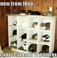 Crazy, Ikea, and Memes: new from Ikea  Crazy Cat Lady  organizer