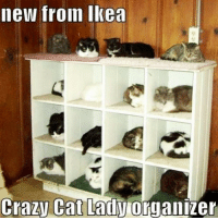 Ikea, Memes, and 🤖: new from Ikea  Crazy Cat Lady  organizer These would sell like hotcakes!