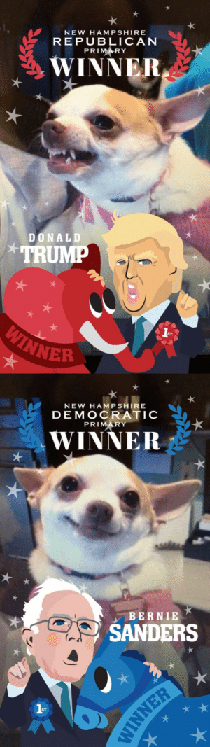 alexanderhams:  i was told to post these on here   YES I AM THAT CHIHUAHUA : NEW HAMPSHIRE  REPUBLICAN  PRIMARY  WINNER  DONALD  TRUMP  WER   NEW HAMPSHIRE  DEMOCRATIC  PRIMARY  WINNER  BERNIE  SANDERS  ST alexanderhams:  i was told to post these on here   YES I AM THAT CHIHUAHUA