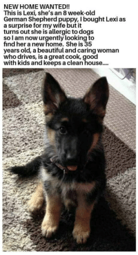 Beautiful, Club, and Dogs: NEW HOME WANTED!!  This is Lexi, she's an 8 week-old  German Shepherd puppy, I bought Lexi as  a surprise for my wife but it  turns out she is allergic to dogs  so l am now urgently looking to  find her a new home. She is 35  years old, a beautiful and caring woman  who drives, is a great cook, good  with kids and keeps a clean house.... laughoutloud-club:  John Wick would do it