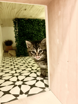 Her, Kitten, and She: New Kitten exploring her She Shed