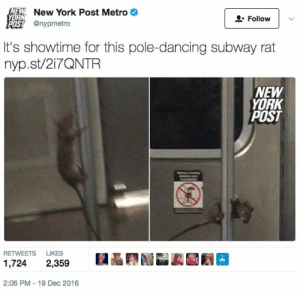 17 Things Literally No One Tells You About Living In NYC: NEW New York Post Metro  YORK  Follow  POST @nypmetro  It's showtime for this pole-dancing subway rat  nyp.st/217QNTR  NEW  YORK  POST  RETWEETS  LIKES  1,724  2,359  2:06 PM - 19 Dec 2016 17 Things Literally No One Tells You About Living In NYC