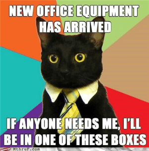 25 Business Cat Memes #sayingimages #businesscatmemes #businesscat #memes #funnymemes: NEW OFFICE EQUIPMENT  HAS ARRIVED  IF ANYONE NEEDS ME, I'LL  BE IN ONE OF THESE BOXES  MthruF.com 25 Business Cat Memes #sayingimages #businesscatmemes #businesscat #memes #funnymemes