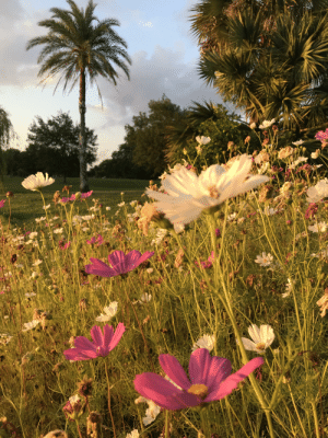 New Orleans, City, and Park: New Orleans' City Park at golden hour.