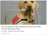 me irl: New Program Provides Depressed Americans With  Suicide Assistance Dogs  The Onion - America's Finest News Source  THEONION.COM me irl