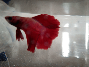 New quarantine buddy! His name is Eldritch the Fifth :): New quarantine buddy! His name is Eldritch the Fifth :)