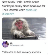 Memes, Snow, and Hell: New Study Finds Female Snow  Monkeys Literally Need Spa Days for  Their Mental Health csmo.us/  OGqmhVh  gc.  @Knowgcmusic  Y'all extra as hell in every species 😂😂