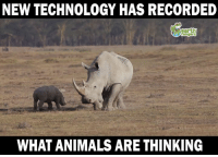 NEW TECHNOLOGY HAS RECORDED  WHAT ANIMALS ARE THINKING Incredible technology!
