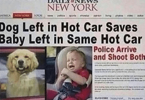 Woof: NEW YORK  MIICA STWWOX (OCAL  Dog Left in Hot Car Saves  Baby Left in Same Hot Car  Police Arrive  and Shoot Both  ASUS Woof