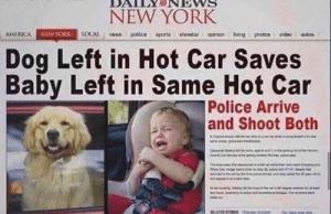 America, Dogs, and New York: NEW YORK  news politics sports 1 showbiz opinion iving photos video autos  LOCAL  AMERICA  NEWYORK  Dog Left in Hot Car Saves  Baby Left in Same Hot Car  Police Arrive  and Shoot Both  y  Crty Co  The  ww.  A or Dogs > Kids