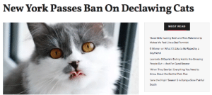 femestella: New York is in the process of becoming the first state to ban the declawing of cats and thank goodness! The New York Congress officially passed the bill on Tuesday and now all we need is for Gov. Andrew Cuomo to sign it into law. Declawing cats is an incredibly inhumane procedure which involves amputating a cat's toes up to the first knuckle. The surgeries are not only medically unnecessary but can come with severe side effects. Read it here : New York Passes Ban On Declawing Cats  MOST READ  'Good Girls': Loving Beth and Rio's Relationship  Makes Me Feel Like a Bad Feminist  5 Women on What It's Like to Be Raped by a  Boyfriend  Leonardo DiCaprio's Dating Habits Are Grossing  People Out And For Good Reason  When They See Us: Everything You Need to  Know About the Central Park Five  Jane the Virgin' Season 5 Is Dving a Slow Painful  Death femestella: New York is in the process of becoming the first state to ban the declawing of cats and thank goodness! The New York Congress officially passed the bill on Tuesday and now all we need is for Gov. Andrew Cuomo to sign it into law. Declawing cats is an incredibly inhumane procedure which involves amputating a cat's toes up to the first knuckle. The surgeries are not only medically unnecessary but can come with severe side effects. Read it here