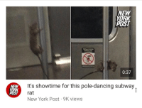 Being Alone, Dancing, and New York: NEW  YORK  POST  0:37  NEW  YORK  POST  It's showtime for this pole-dancing subway,  rat  New York Post 9K views You guys leave Remy alone he's fallen on hard times since his restaurant was closed.