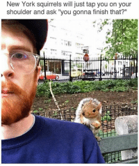 """Funny, Jay, and Memes: New York squirrels will just tap you on your  shoulder and ask """"you gonna finish that?"""" Them little fuckers got some nerve @Dagenius_Jay33 Dagenius_Jay33 dageniuscomedy jay funny reblog retweet follow follow followme followers follower followhim followall comment comments commentbelow popular instagood iphonesia photooftheday instamood picoftheday bestoftheday instadaily igdaily instagramhub instacool me photo"""