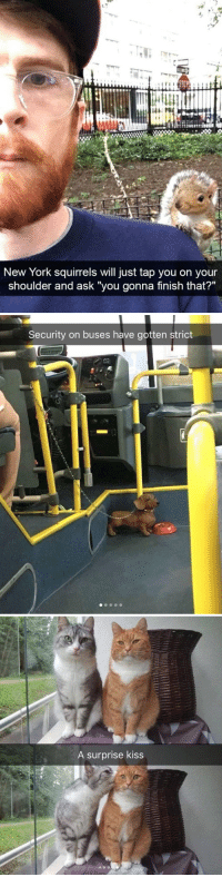 "New York, Target, and Tumblr: New York squirrels will just tap you on your  shoulder and ask ""you gonna finish that?""   Security on buses have gotten strict   A surprise kiss animalsnaps:Animal snaps"