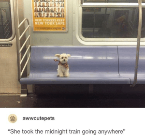 """Just a small town girl...: NEW YORKERS KEEP  NEW YORK SAFE  AF YOU SEE SOMETHING.SAYSOMRTHING  ot lean on door  awwcutepets  """"She took the midnight train going anywhere"""" Just a small town girl..."""