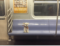 """Lean, New York, and Tumblr: NEW YORKERS KEEP  NEW YORK SAFE  t lean on door <p><a href=""""https://doggos-with-jobs.tumblr.com/post/176440295605/he-keeps-new-york-safe"""" class=""""tumblr_blog"""">doggos-with-jobs</a>:</p><blockquote><p>He keeps New York safe</p></blockquote>"""