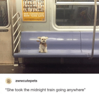 """Go Follow @Tipsy 🤣😂: NEW YORKERS KEEP  NEW YORK SAFE  t lean on door  awwcutepets  """"She took the midnight train going anywhere"""" Go Follow @Tipsy 🤣😂"""