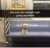 Train, Midnight, and She: NEW YORKERS KEEP  she took the midnight train  going anywhere  door