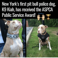 Dank, Dogs, and New York: New York's first pit bull police dog,  K9 Kiah, has received the ASPCA  Public Service Award!  T  POLICE  UNIT Well done, Kiah! Paving the way 👏