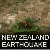 14 NOV: Strong aftershocks are hitting New Zealand following a 7.8-magnitude earthquake which killed two people. There have been hundreds of tremors on the South Island, including a 6.3-magnitude quake. The epicentre was north-east of Christchurch, near the town of Kaikoura, which has been cut off. For more: bbc.in-nzquake Kaikoura Christchurch NewZealand Earthquake Environment Science BBCShorts BBCNews @bbcnews: NEW ZEALAND  EARTHQUAKE 14 NOV: Strong aftershocks are hitting New Zealand following a 7.8-magnitude earthquake which killed two people. There have been hundreds of tremors on the South Island, including a 6.3-magnitude quake. The epicentre was north-east of Christchurch, near the town of Kaikoura, which has been cut off. For more: bbc.in-nzquake Kaikoura Christchurch NewZealand Earthquake Environment Science BBCShorts BBCNews @bbcnews