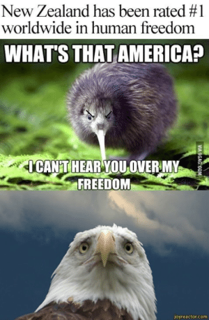 Happy Independence day America, with love from New Zealand: New Zealand has been rated #1  worldwide in human freedom  WHAT'S THAT AMERICA?  CANT HEAR YOU OVERMY  FREEDOM  joyreactor.com Happy Independence day America, with love from New Zealand