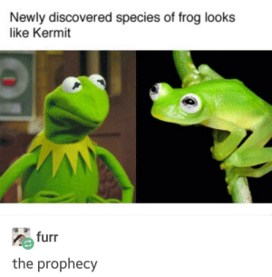 The Prophecy, Irl, and Me IRL: Newly discovered species of frog looks  like Kermit  furr  the prophecy me irl